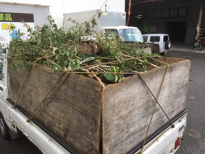 剪定枝などの回収・処分